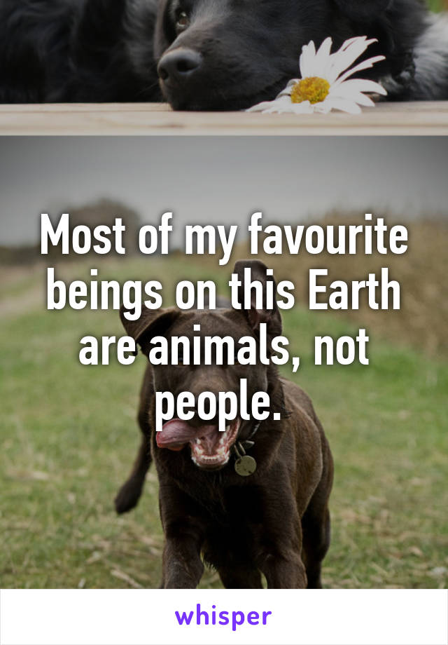 Most of my favourite beings on this Earth are animals, not people.