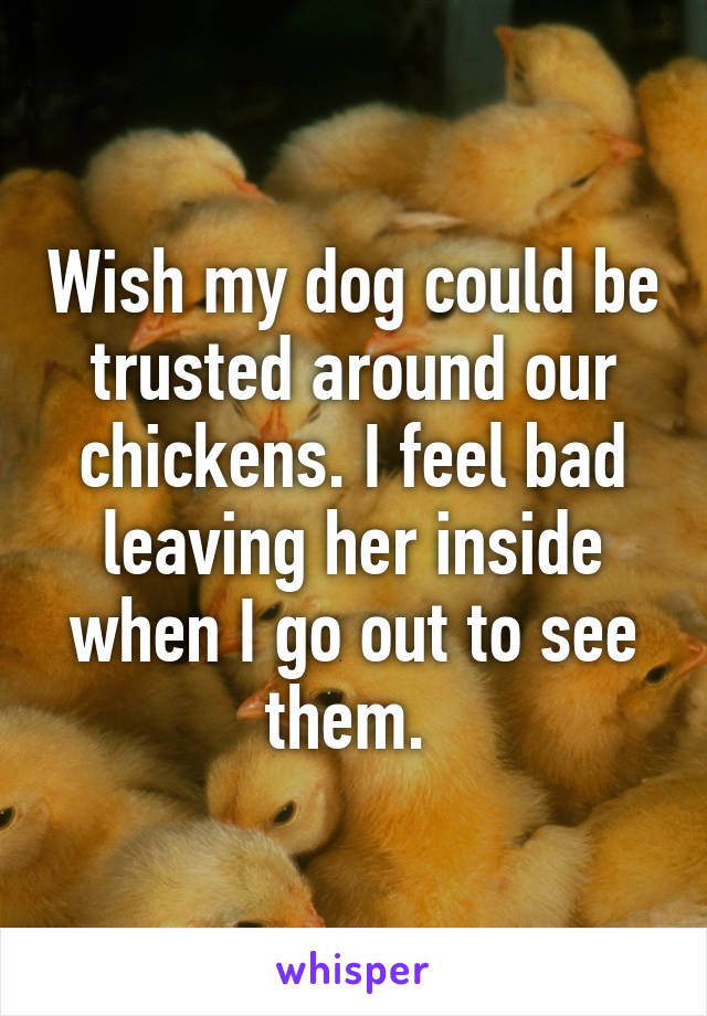 Wish my dog could be trusted around our chickens. I feel bad leaving her inside when I go out to see them.