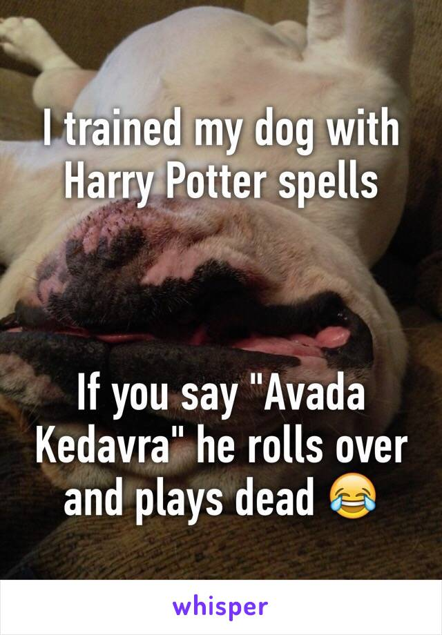 """I trained my dog with Harry Potter spells     If you say """"Avada Kedavra"""" he rolls over and plays dead 😂"""