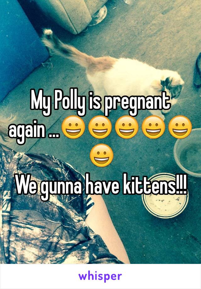 My Polly is pregnant again ...😀😀😀😀😀😀 We gunna have kittens!!!