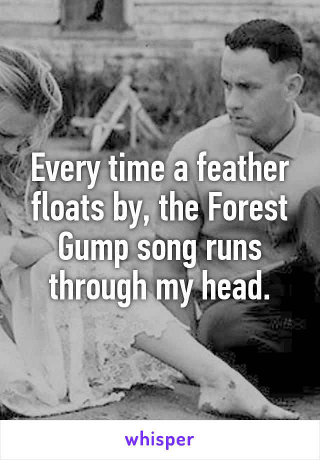 Every time a feather floats by, the Forest Gump song runs through my head.