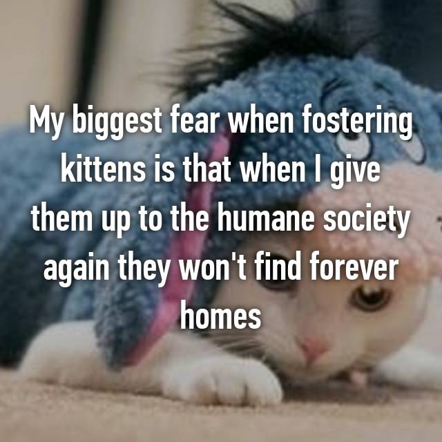 My biggest fear when fostering kittens is that when I give them up to the humane society again they won't find forever homes