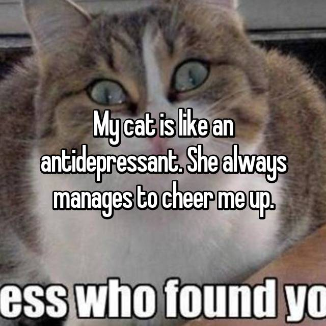 My cat is like an antidepressant. She always manages to cheer me up.