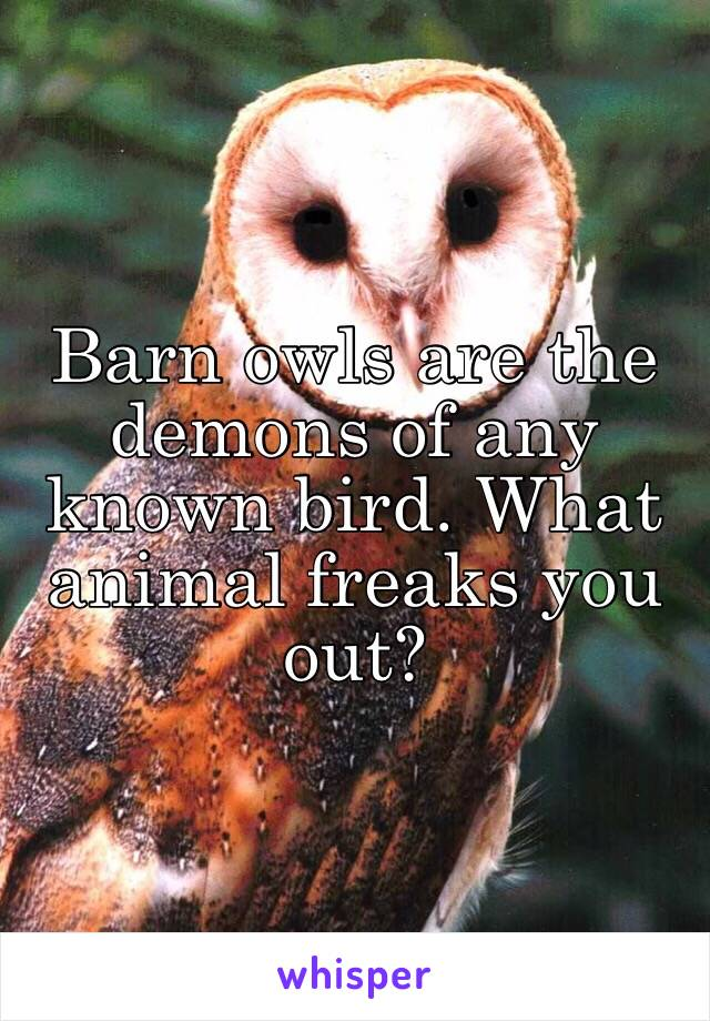 Barn owls are the demons of any known bird. What animal freaks you out?