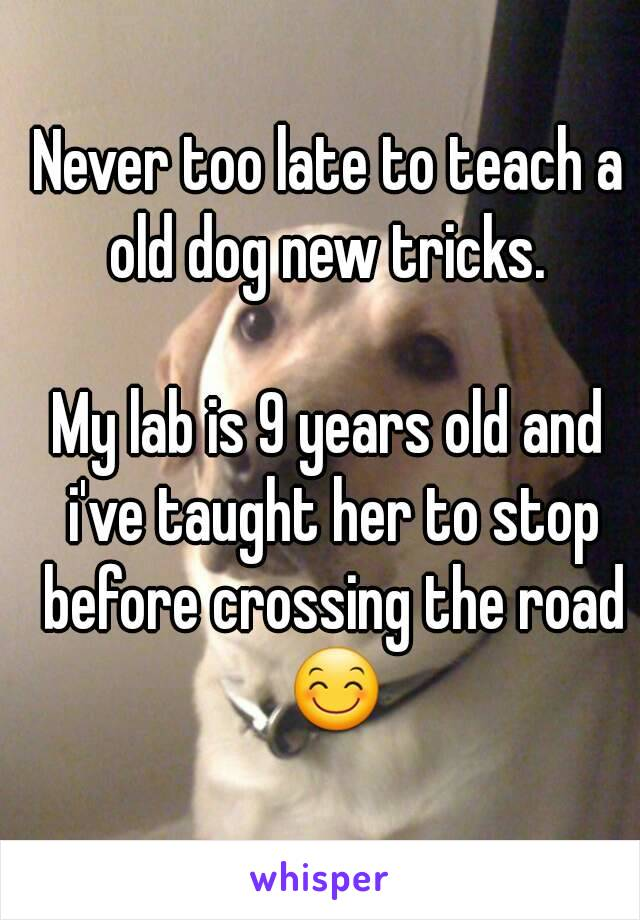 Never too late to teach a old dog new tricks.   My lab is 9 years old and i've taught her to stop before crossing the road 😊
