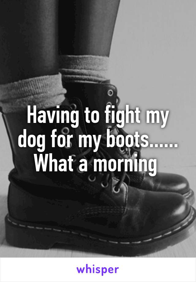 Having to fight my dog for my boots...... What a morning