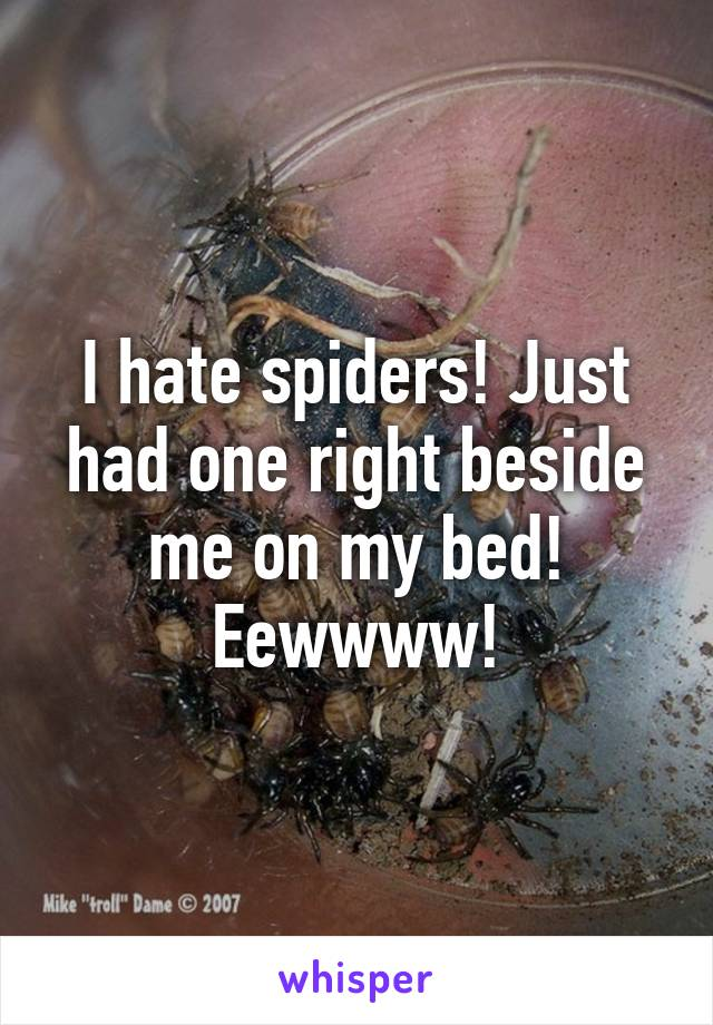 I hate spiders! Just had one right beside me on my bed! Eewwww!