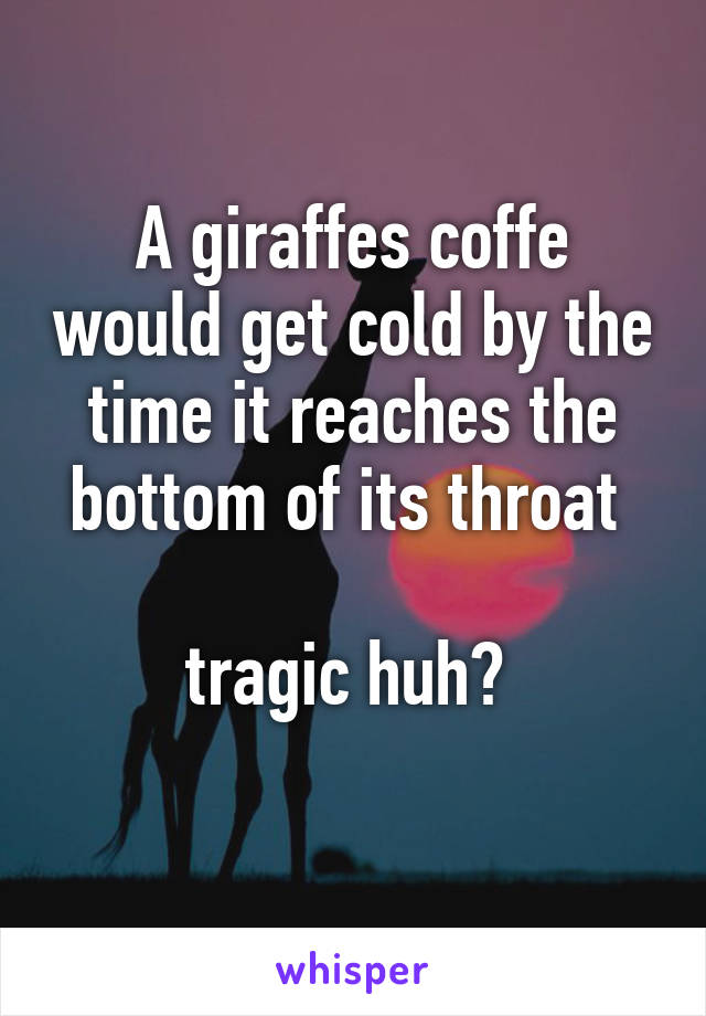 A giraffes coffe would get cold by the time it reaches the bottom of its throat   tragic huh?