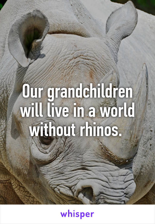 Our grandchildren will live in a world without rhinos.
