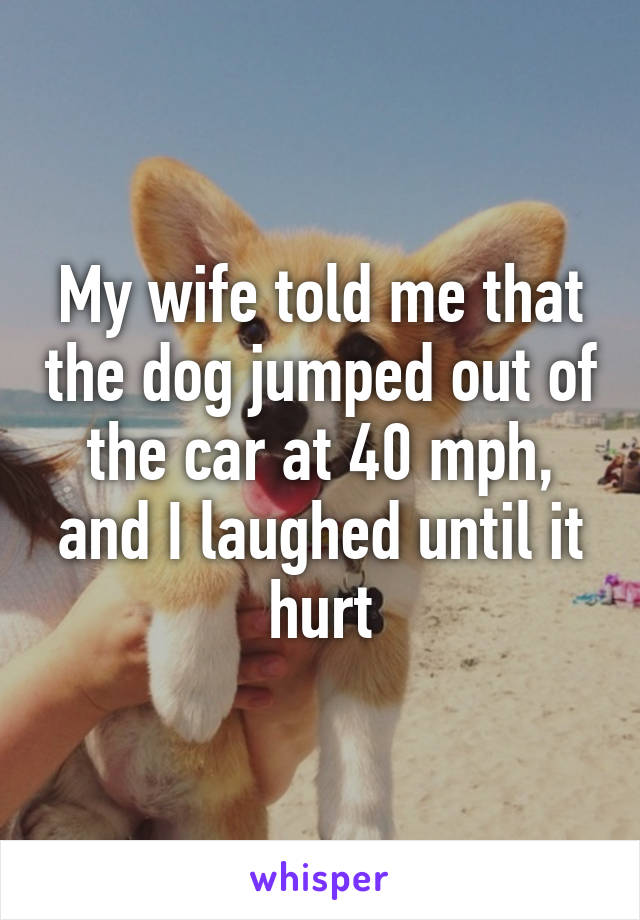 My wife told me that the dog jumped out of the car at 40 mph, and I laughed until it hurt