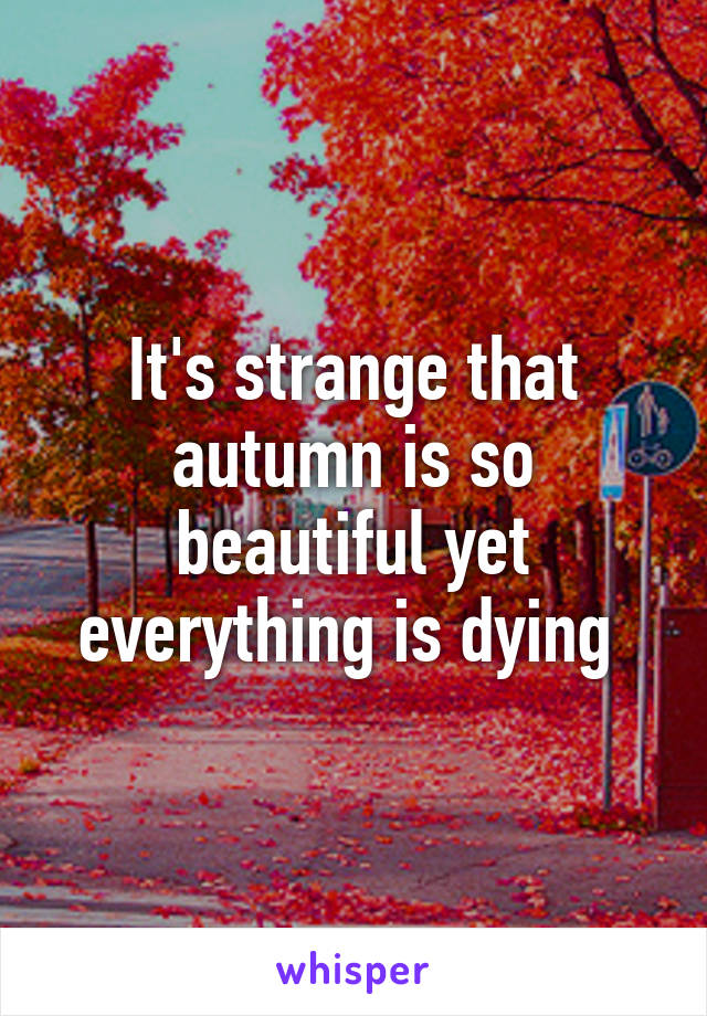 It's strange that autumn is so beautiful yet everything is dying
