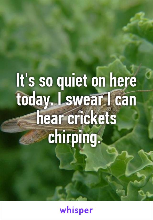 It\'s so quiet on here today. I swear I can hear crickets chirping.