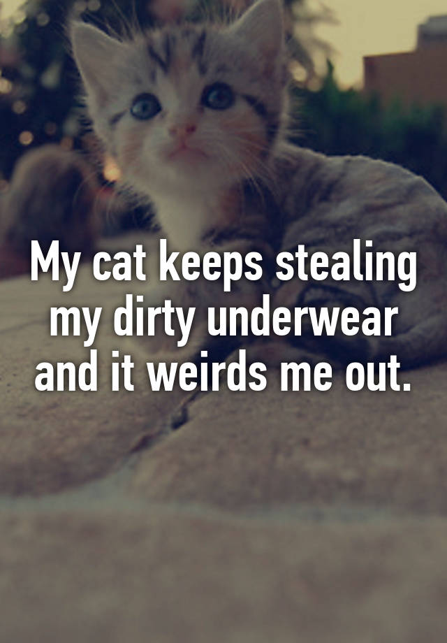 b8aab7dd182f My cat keeps stealing my dirty underwear and it weirds me out.