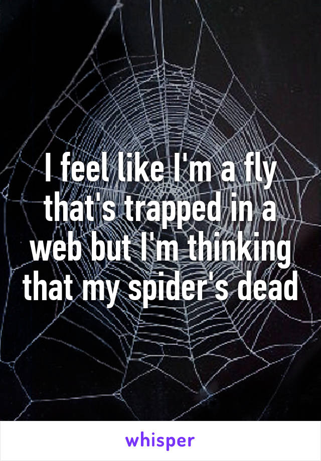 I feel like I'm a fly that's trapped in a web but I'm thinking that my spider's dead