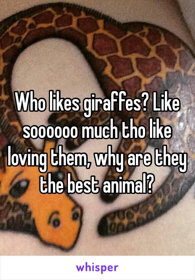 Who likes giraffes? Like soooooo much tho like loving them, why are they the best animal?