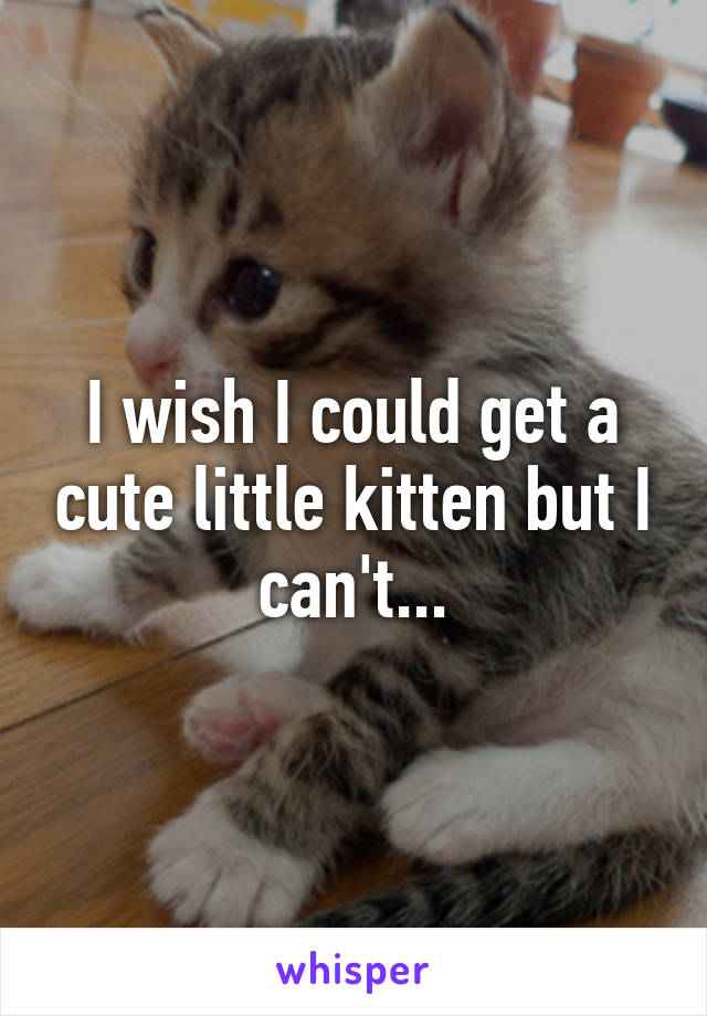 I wish I could get a cute little kitten but I can't...