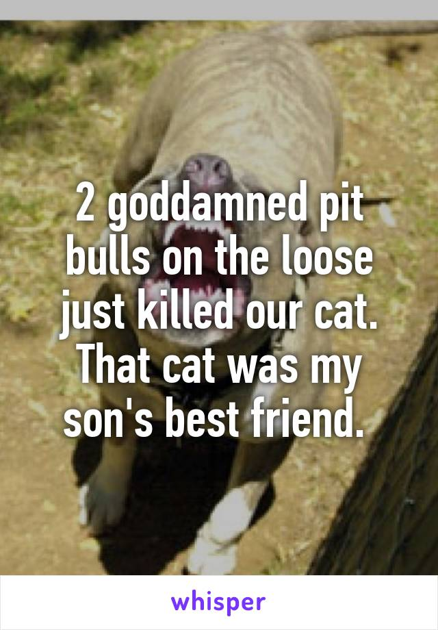 2 goddamned pit bulls on the loose just killed our cat. That cat was my son's best friend.