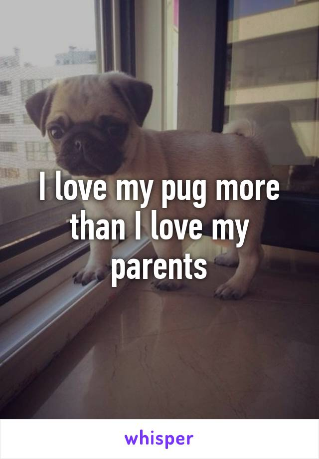 I love my pug more than I love my parents