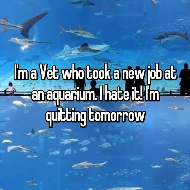 I'm a Vet who took a new job at an aquarium. I hate it! I'm quitting tomorrow