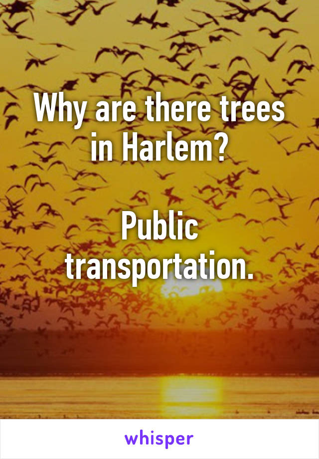 Why are there trees in Harlem?  Public transportation.