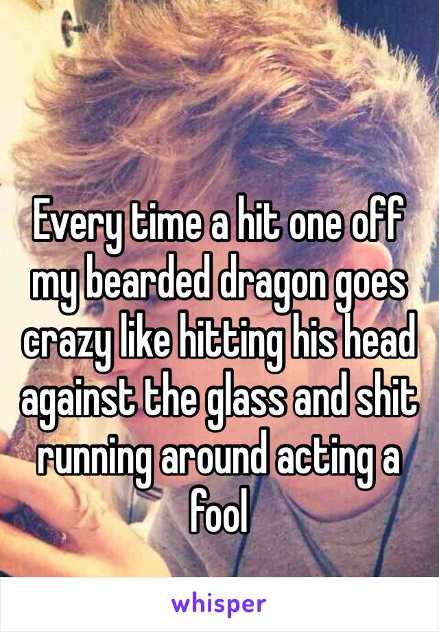 Every time a hit one off my bearded dragon goes crazy like hitting his head against the glass and shit running around acting a fool