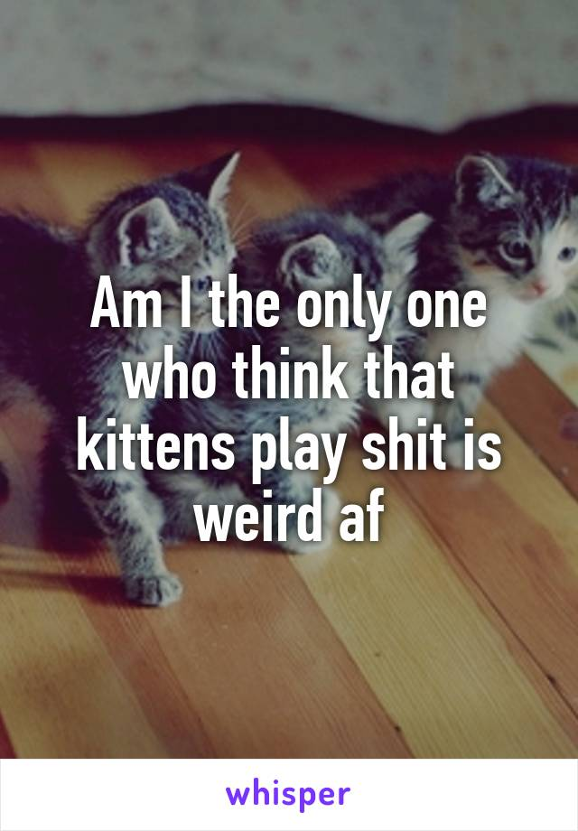 Am I the only one who think that kittens play shit is weird af