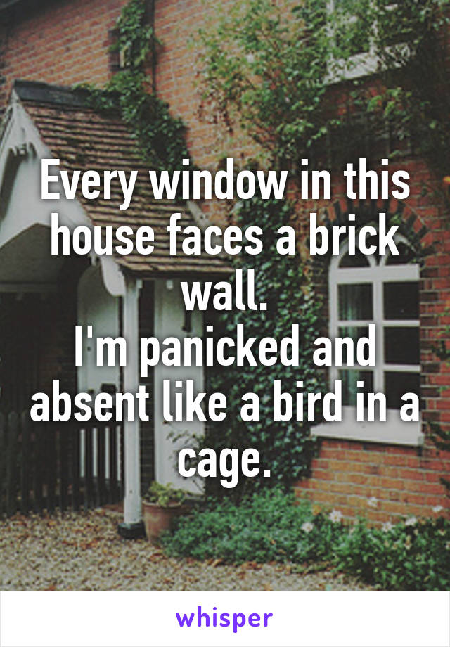 Every window in this house faces a brick wall. I'm panicked and absent like a bird in a cage.