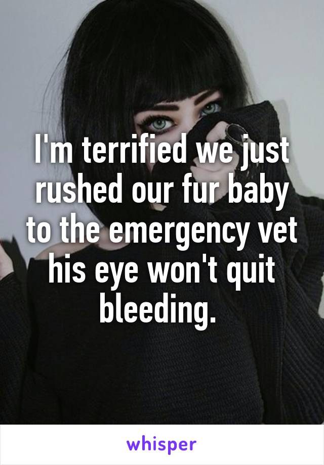 I'm terrified we just rushed our fur baby to the emergency vet his eye won't quit bleeding.