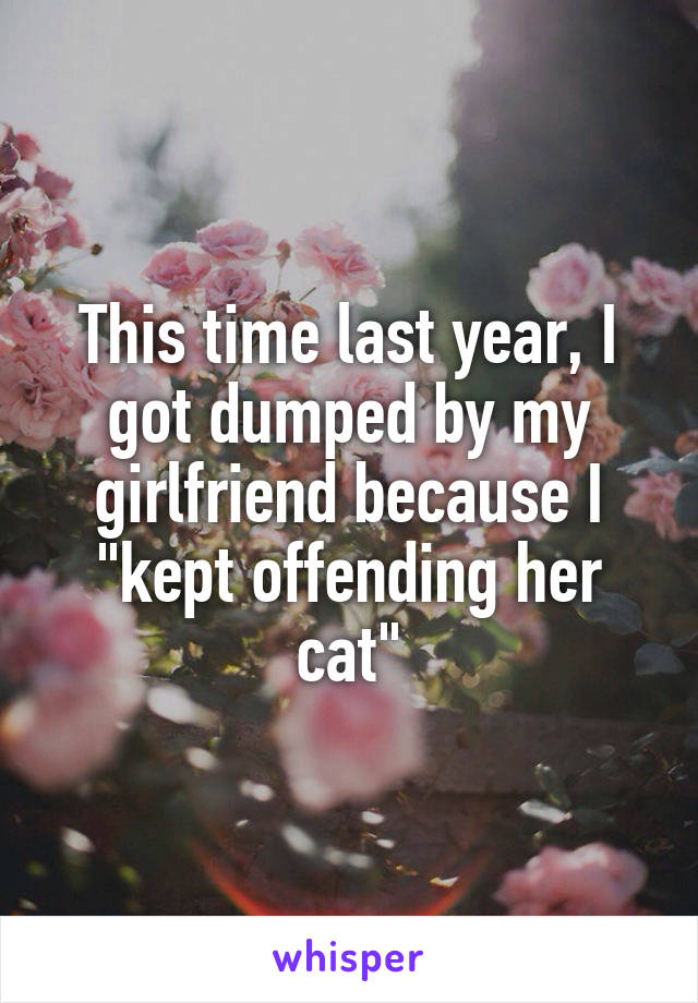 """This time last year, I got dumped by my girlfriend because I """"kept offending her cat"""""""