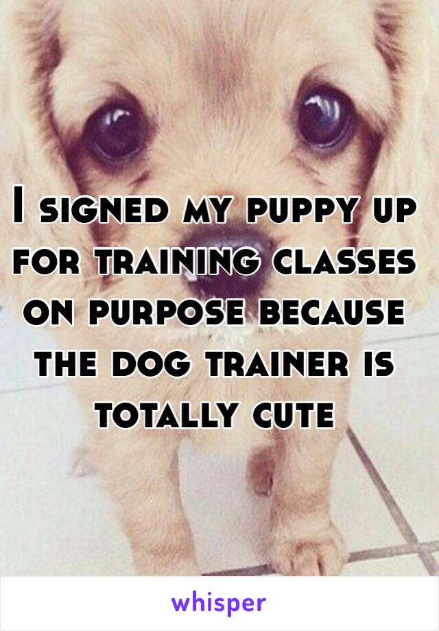 I signed my puppy up for training classes on purpose because the dog trainer is totally cute