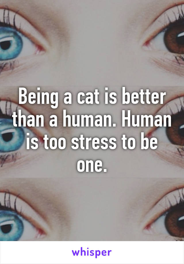 Being a cat is better than a human. Human is too stress to be one.