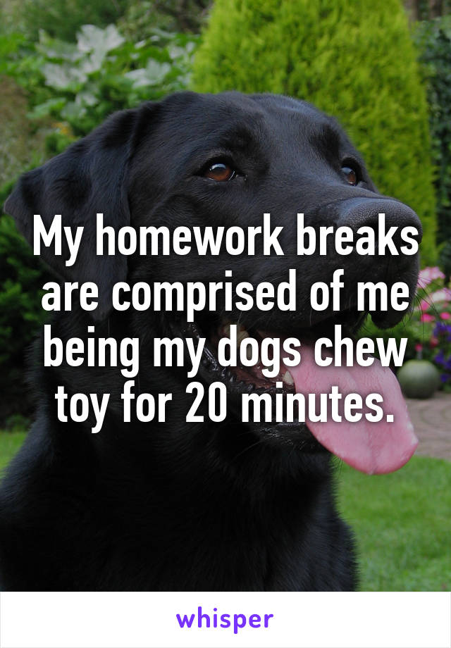 My homework breaks are comprised of me being my dogs chew toy for 20 minutes.