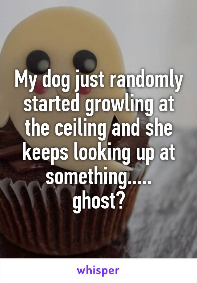 My dog just randomly started growling at the ceiling and she keeps looking up at something..... ghost?