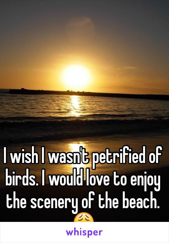 I wish I wasn't petrified of birds. I would love to enjoy the scenery of the beach. 😩