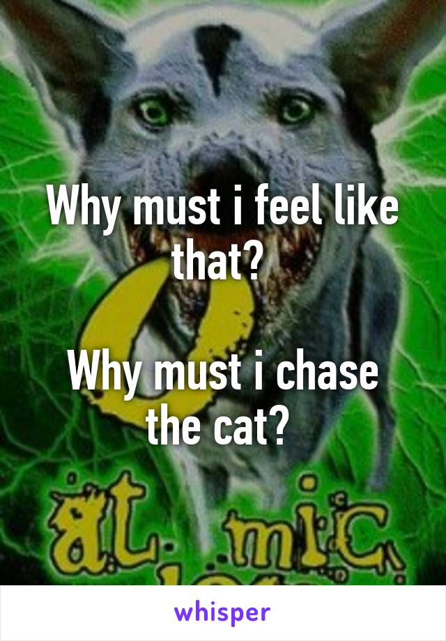 Why must i feel like that?   Why must i chase the cat?