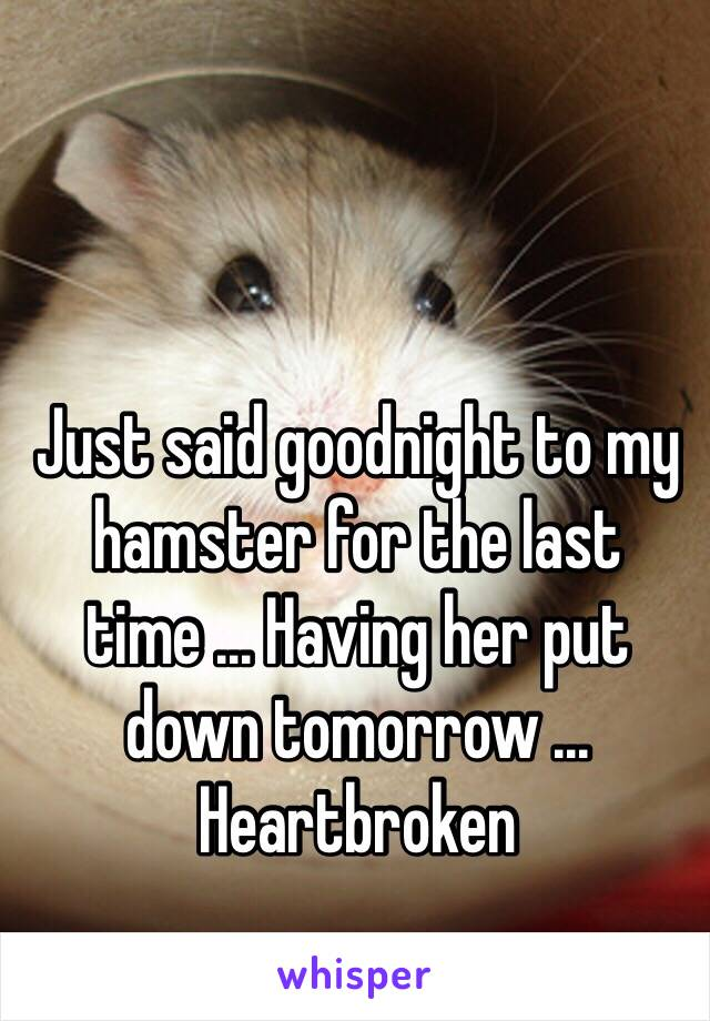 Just said goodnight to my hamster for the last time ... Having her put down tomorrow ... Heartbroken
