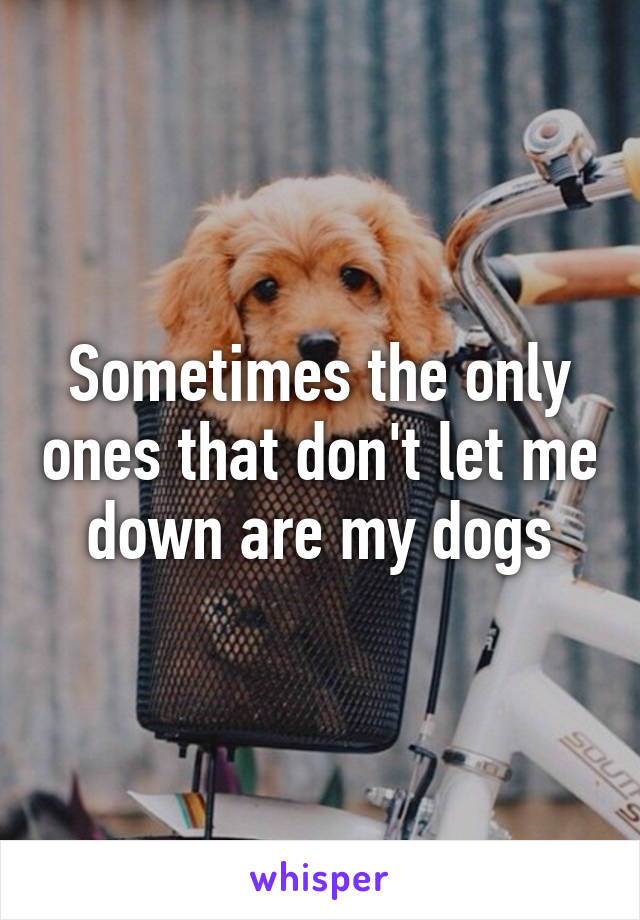 Sometimes the only ones that don't let me down are my dogs