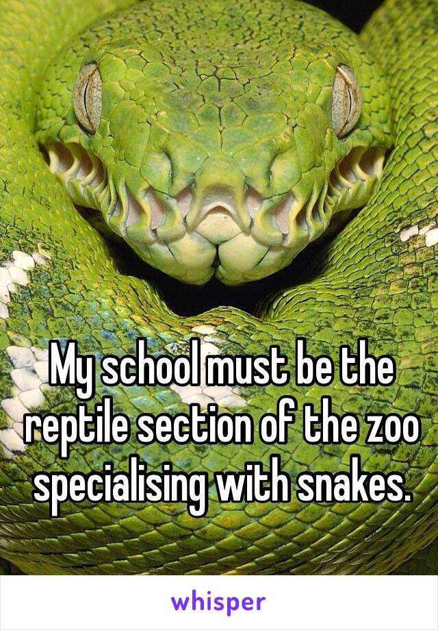 My school must be the reptile section of the zoo specialising with snakes.