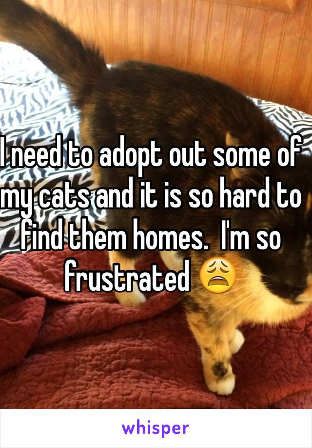 I need to adopt out some of my cats and it is so hard to find them homes.  I'm so frustrated 😩