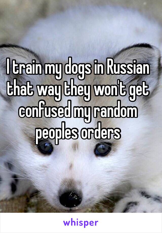 I train my dogs in Russian that way they won't get confused my random peoples orders