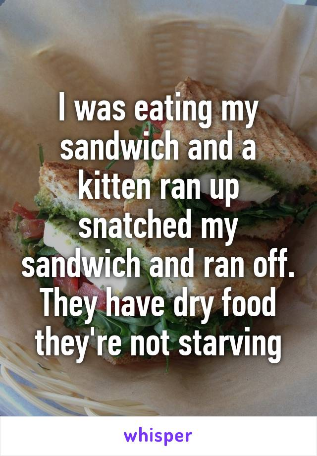 I was eating my sandwich and a kitten ran up snatched my sandwich and ran off. They have dry food they're not starving