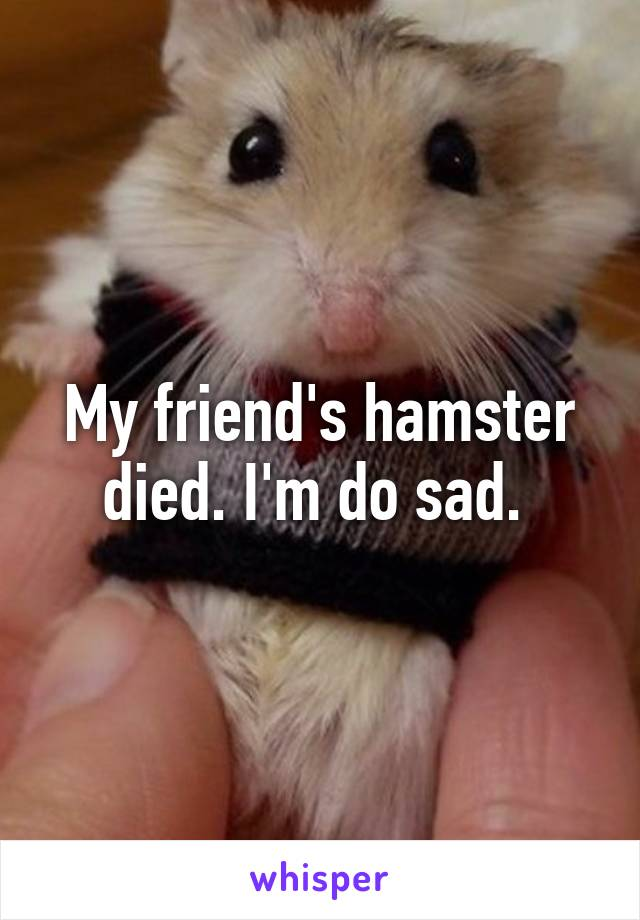My friend's hamster died. I'm do sad.