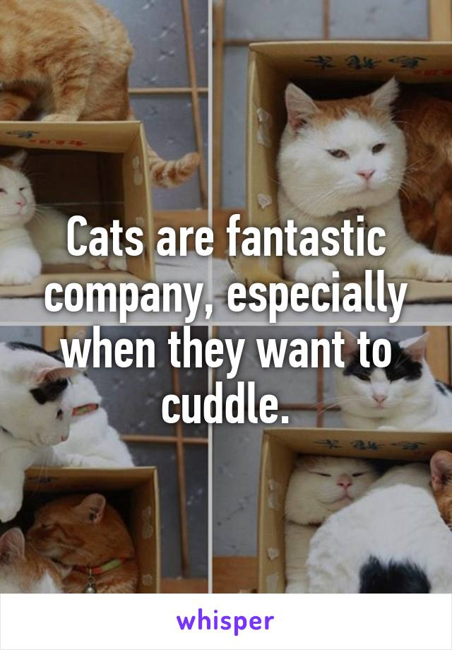 Cats are fantastic company, especially when they want to cuddle.