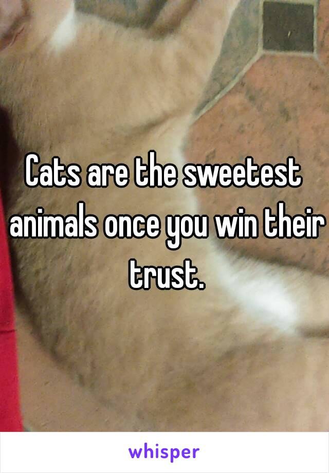 Cats are the sweetest animals once you win their trust.