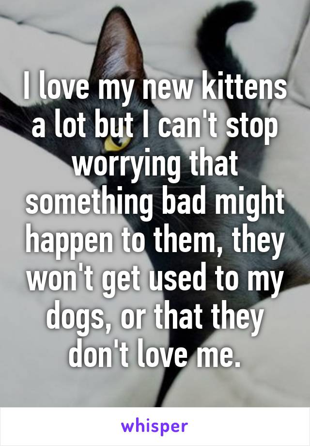 I love my new kittens a lot but I can't stop worrying that something bad might happen to them, they won't get used to my dogs, or that they don't love me.