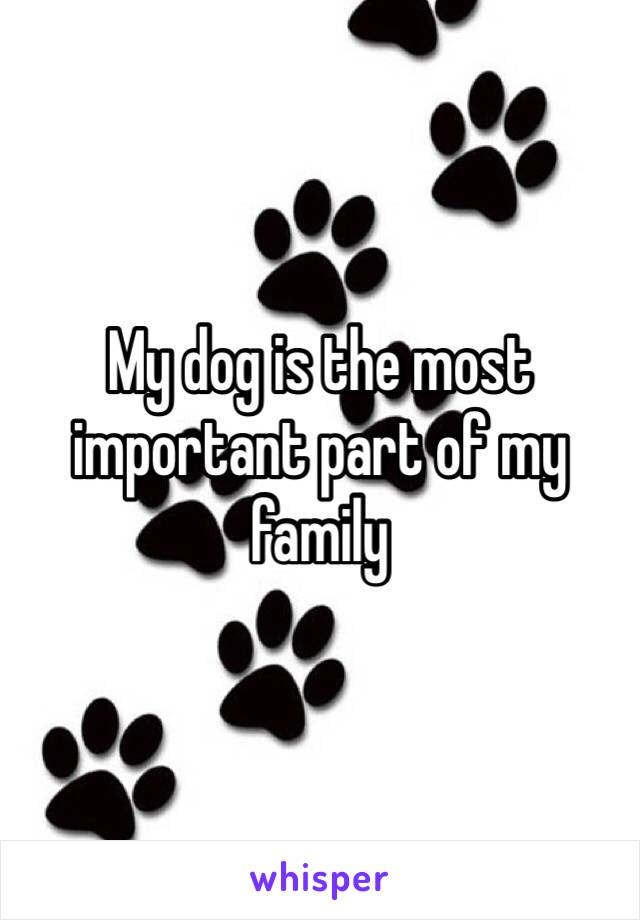 My dog is the most important part of my family