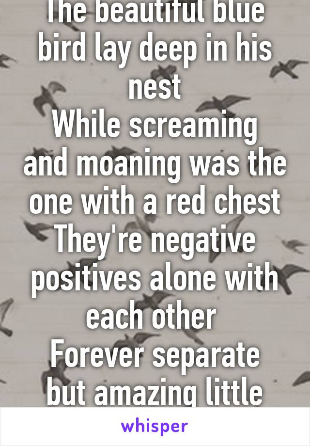 The beautiful blue bird lay deep in his nest While screaming and moaning was the one with a red chest They're negative positives alone with each other  Forever separate but amazing little lovers
