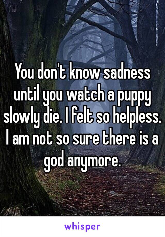You don't know sadness until you watch a puppy slowly die. I felt so helpless. I am not so sure there is a god anymore.