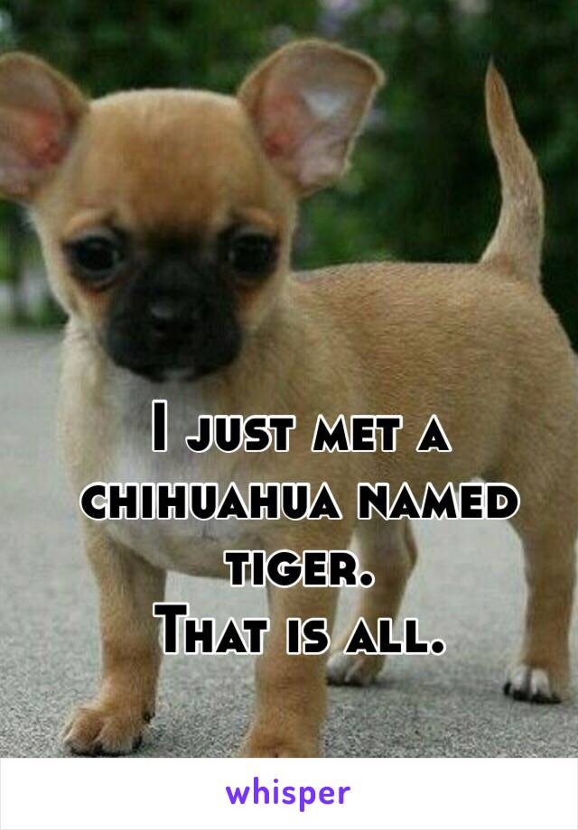 I just met a chihuahua named tiger. That is all.