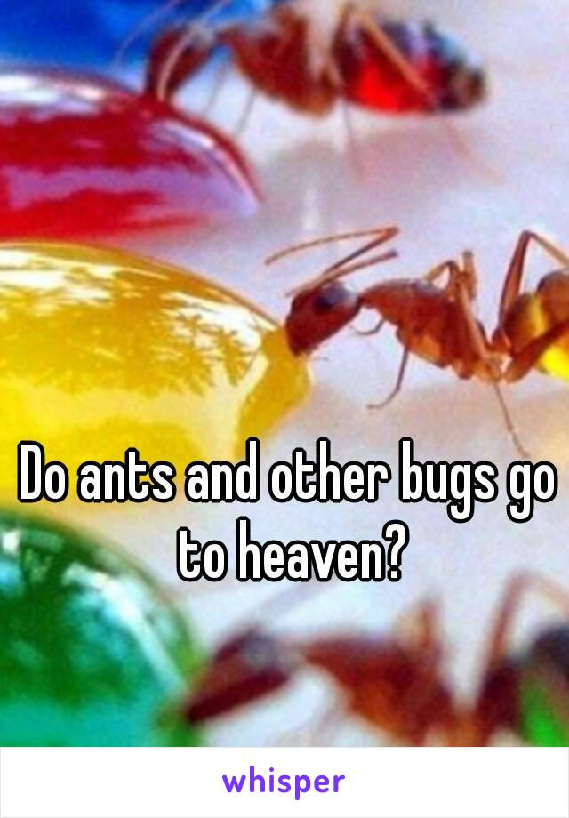 Do ants and other bugs go to heaven?
